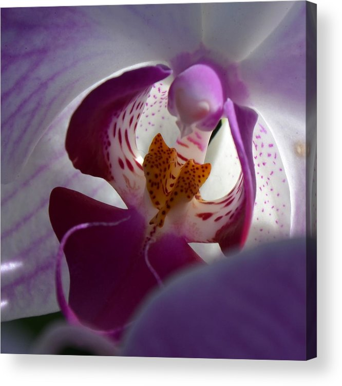 Orchid Acrylic Print featuring the photograph Lavendar World by AnnaJo Vahle