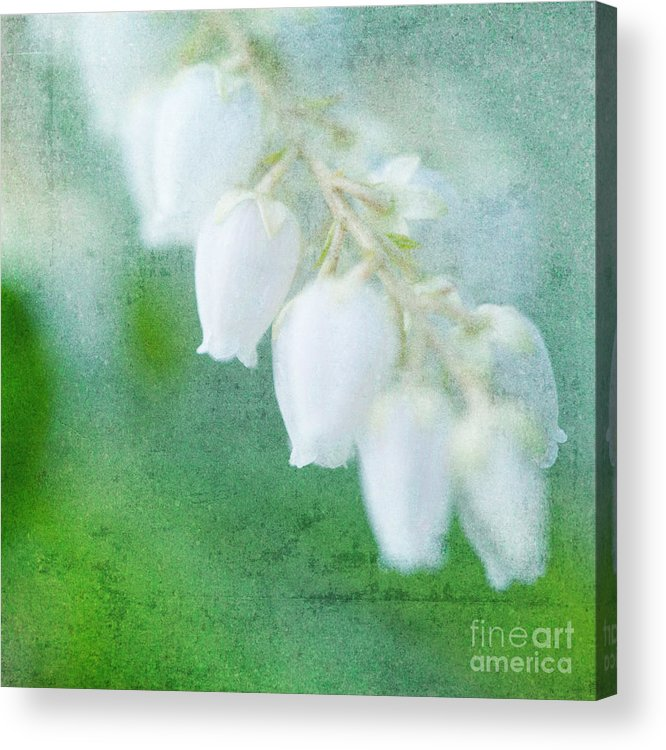 Lily Of The Valley Acrylic Print featuring the photograph Lily Of The Valley by Kim Fearheiley