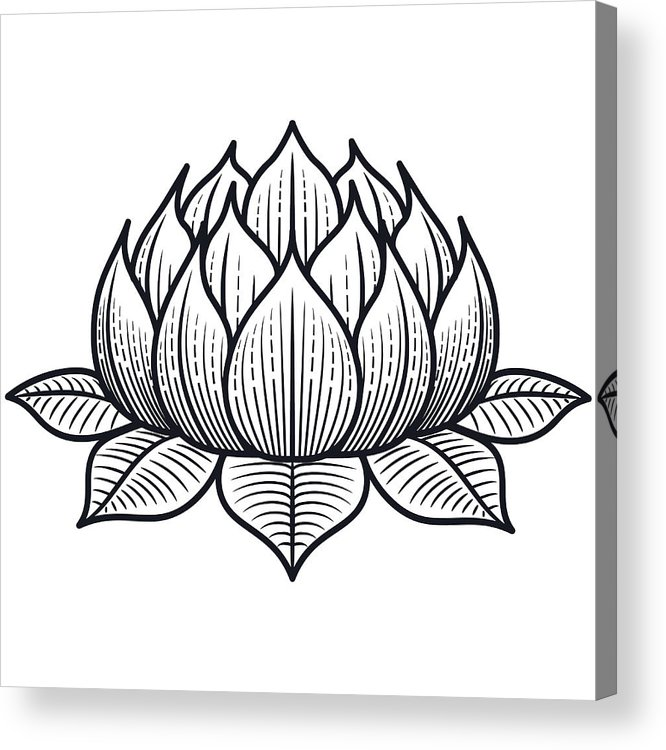 Lotus Flower Silhouette Illustration Vector Acrylic Print By