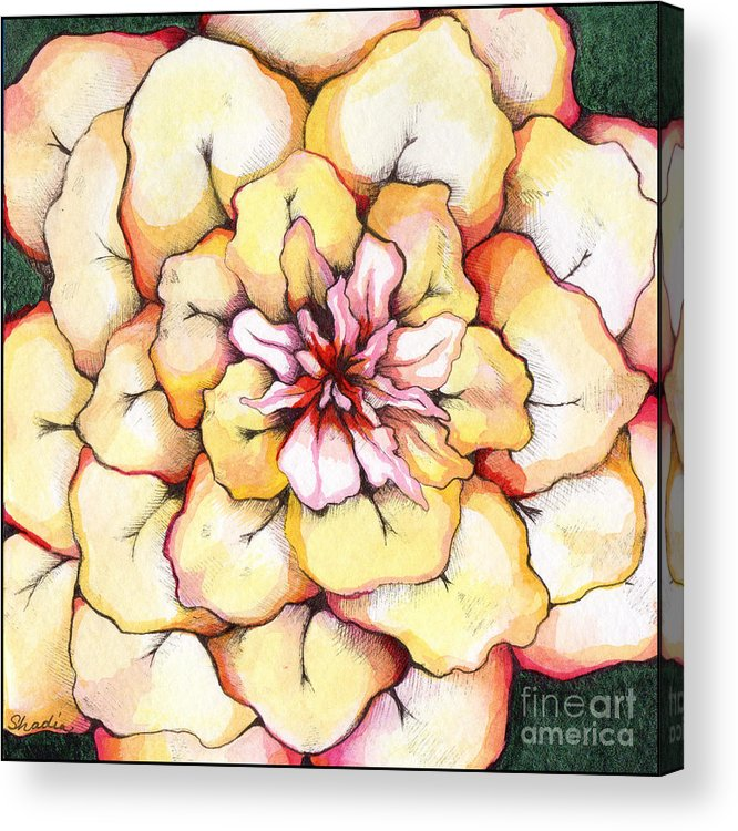 Bloomers Acrylic Print featuring the painting Moon Flower Out Of The Bloomers And Onto The Bloom by Shadia Derbyshire