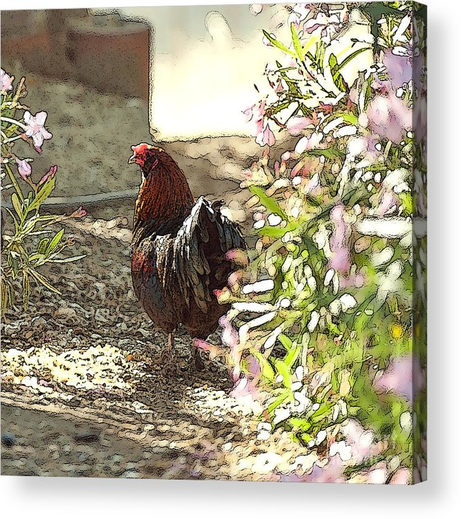 Rooster Art Acrylic Print featuring the painting Mr. Rooster Takes A Stroll by Artist and Photographer Laura Wrede