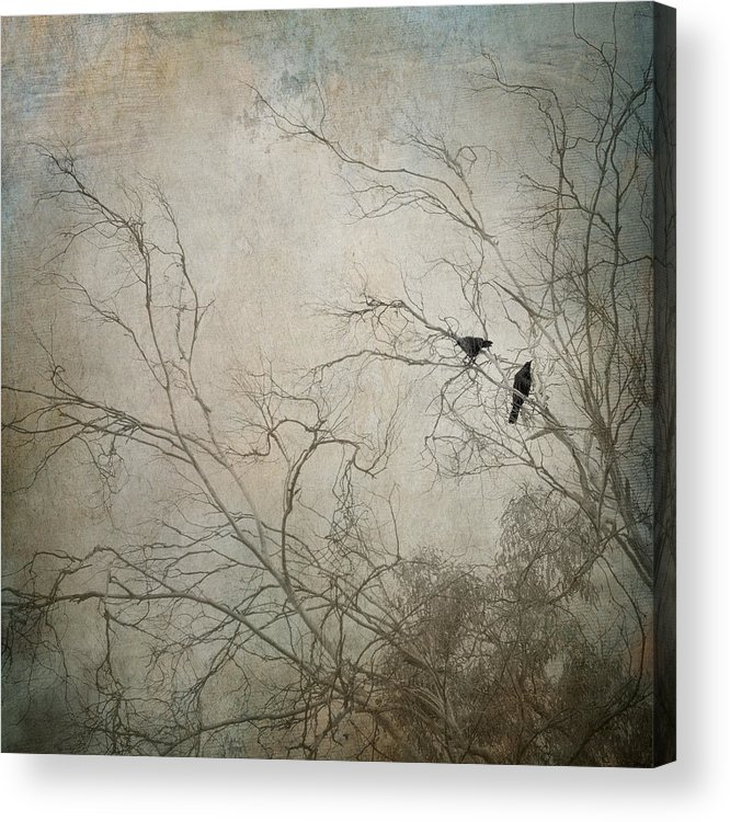 Raven Acrylic Print featuring the photograph Nevermore... by Amy Weiss