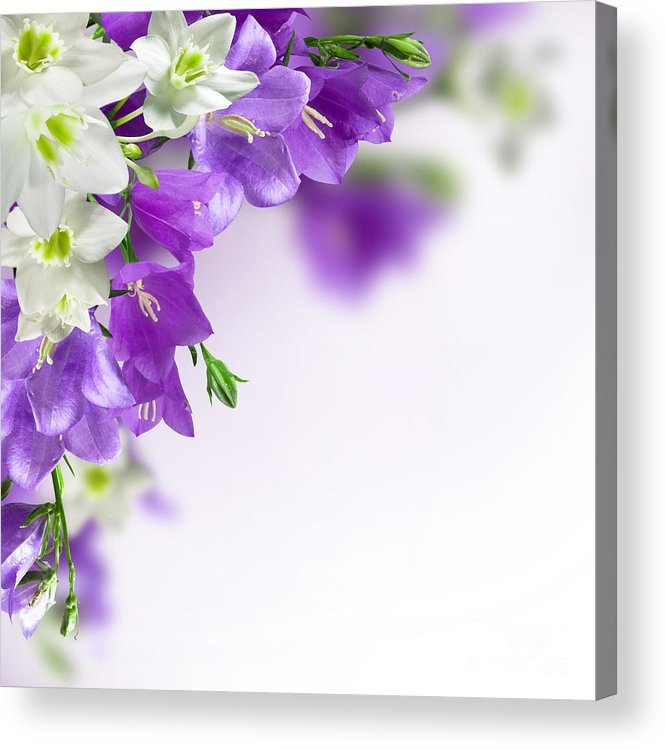 Purple Flower Frames Acrylic Print by Boon Mee