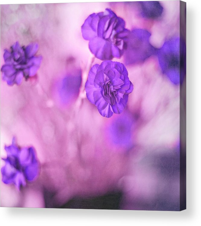 Pretty Flowers Acrylic Print featuring the photograph Purple Flowers by Marisa Horn