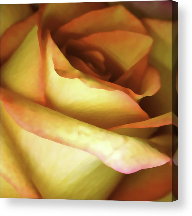 Digital Photogram Acrylic Print featuring the photograph Rose Scan Softened by Paul Shefferly