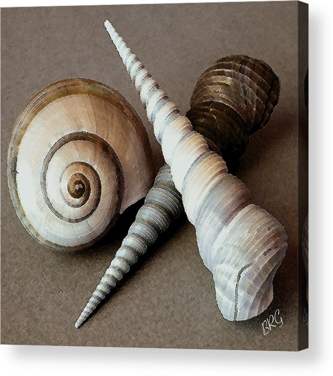Seashell Acrylic Print featuring the photograph Seashells Spectacular No 24 by Ben and Raisa Gertsberg