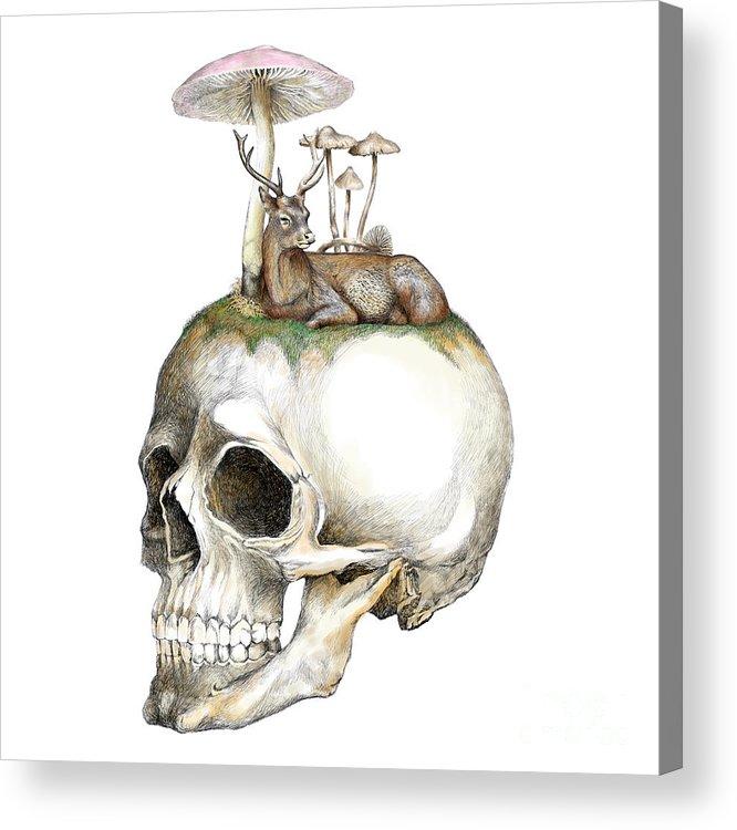 Skull And Mushrooms Acrylic Print by Jakarin Prawatruangsri