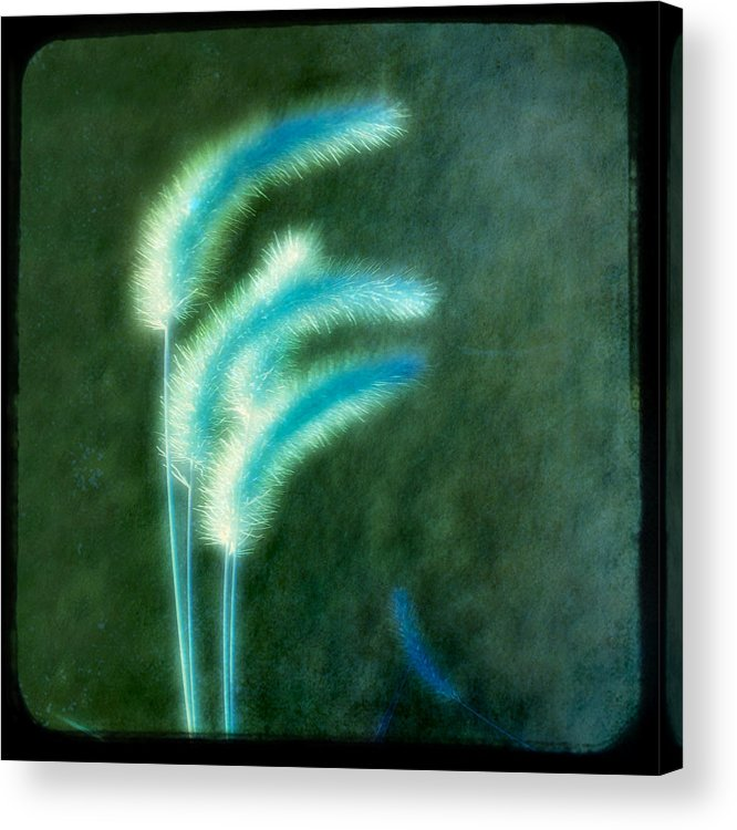 Grass Acrylic Print featuring the photograph Soft Blue Grass by Gothicrow Images