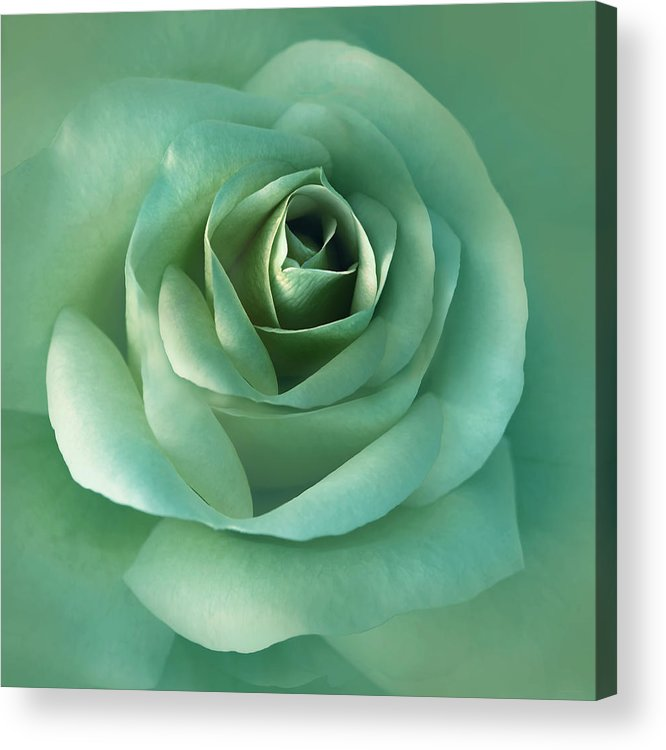Rose Acrylic Print featuring the photograph Soft Emerald Green Rose Flower by Jennie Marie Schell