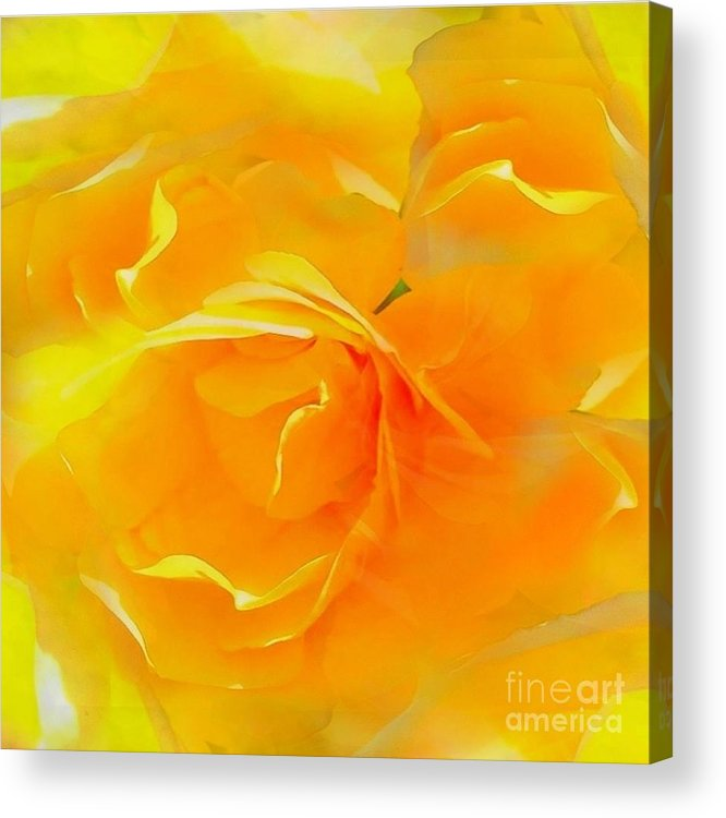 Blushing Acrylic Print featuring the photograph The Blushing Yellow Rose Abstract 2 by Becky Lupe
