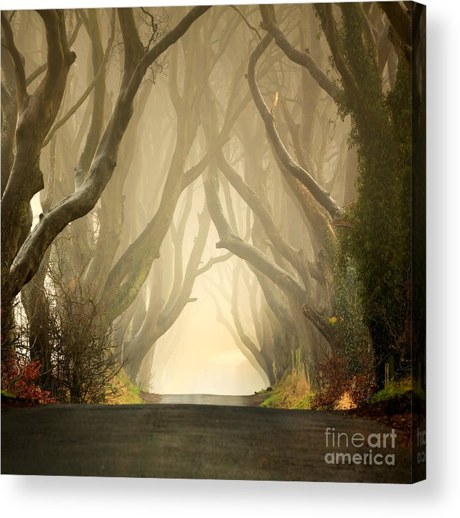 Beech Acrylic Print featuring the photograph The Dark Hedges 2011 by Pawel Klarecki