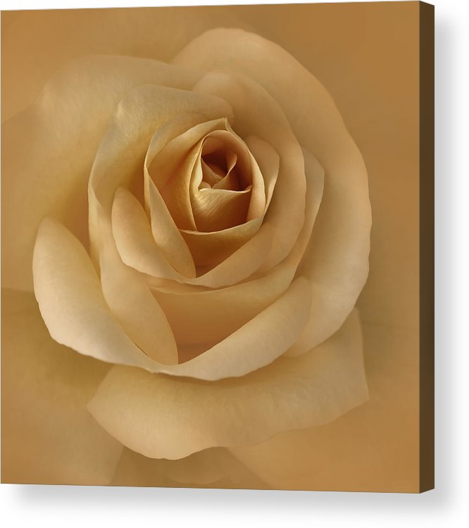 Rose Acrylic Print featuring the photograph The Golden Rose Flower by Jennie Marie Schell