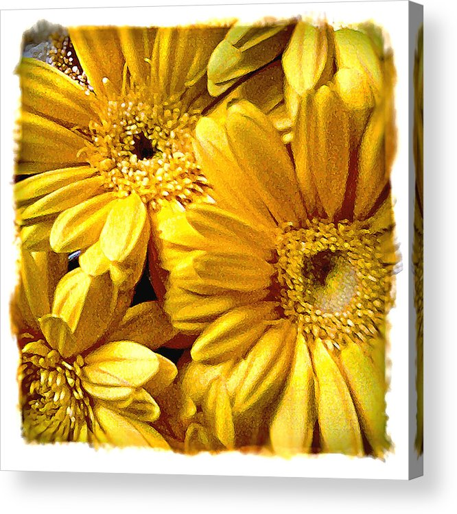 Floral Acrylic Print featuring the photograph Yellow Daisies by Doug Heslep