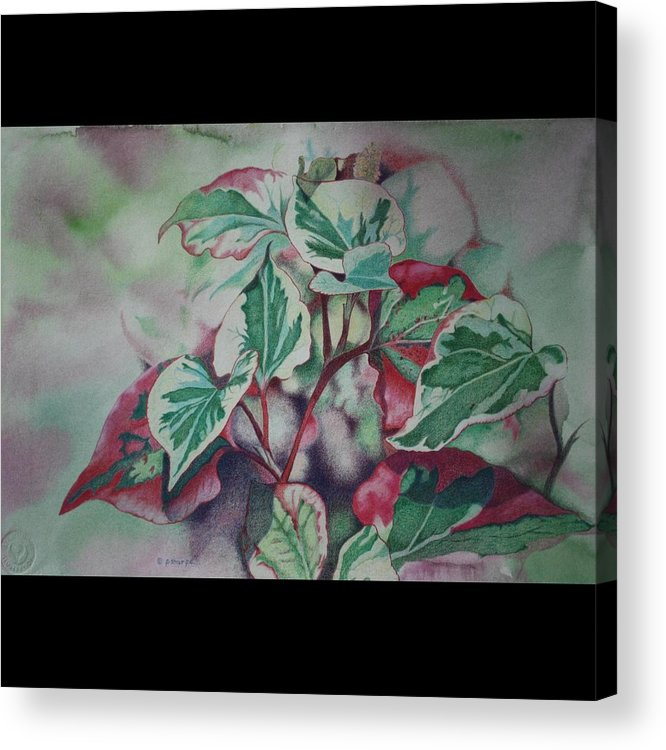Close Focus Nature Scene Acrylic Print featuring the drawing Christmas In July by Patsy Sharpe