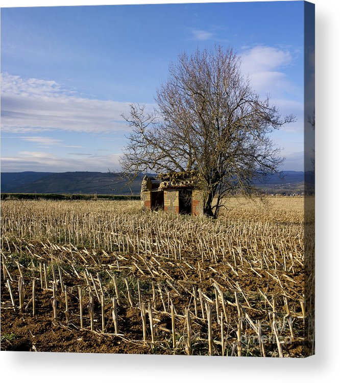Zea Acrylic Print featuring the photograph Old Hut Isolated In A Field. Auvergne. France by Bernard Jaubert