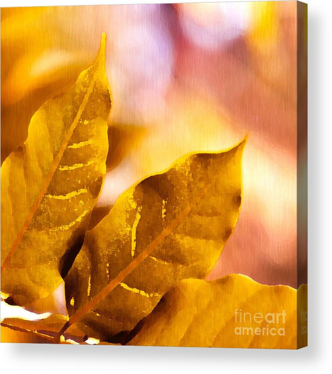 Fall Acrylic Print featuring the drawing When Leaves Turn Gold by Artist and Photographer Laura Wrede