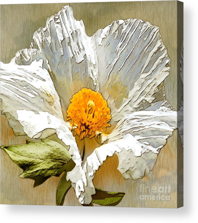 White Flower Acrylic Print featuring the drawing White Paper Flower by Artist and Photographer Laura Wrede