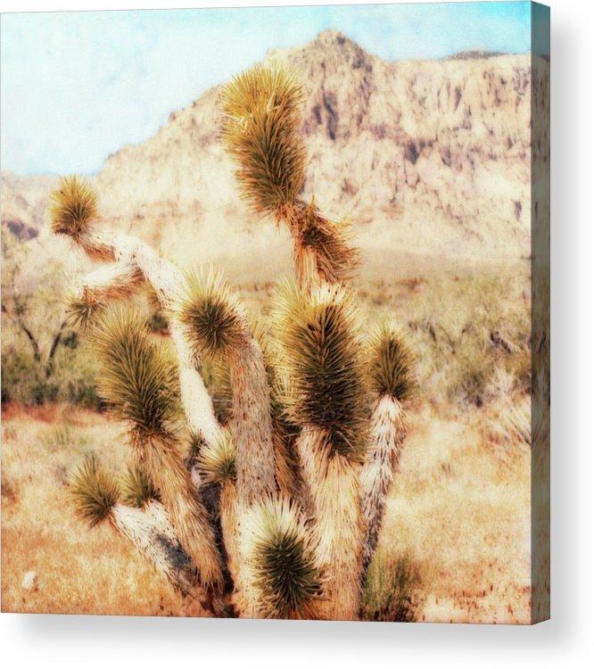 Paul Tokarski Acrylic Print featuring the photograph Desert Yucca by Paul Tokarski