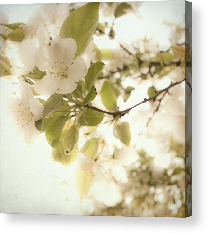 Acrylic Print featuring the photograph Soft White Flowers by Sylvia Coomes
