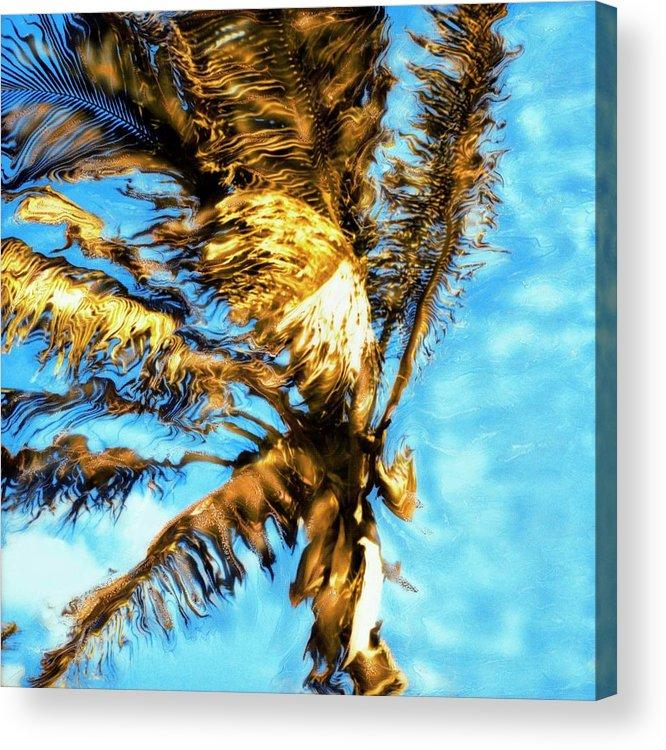Paul Tokarski Acrylic Print featuring the photograph Blue Sky Palm by Paul Tokarski