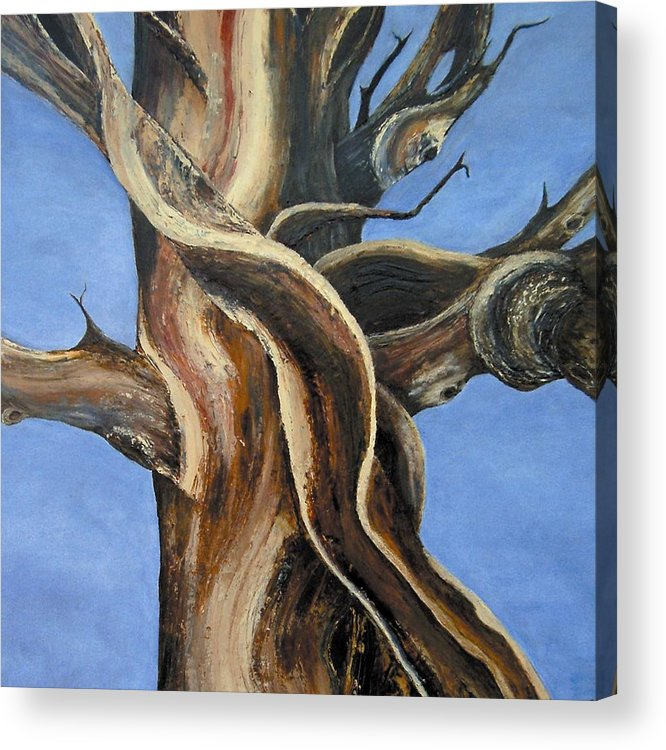 Bristlecone Acrylic Print featuring the painting Bristlecone Tree No.4 by Wanda Pepin