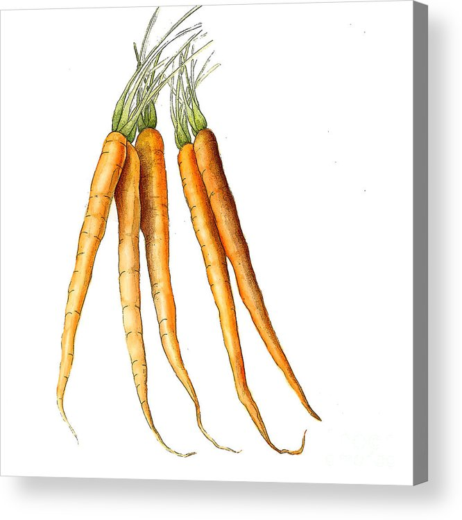 Graphic Acrylic Print featuring the painting Carrot Variation by Fran Henig