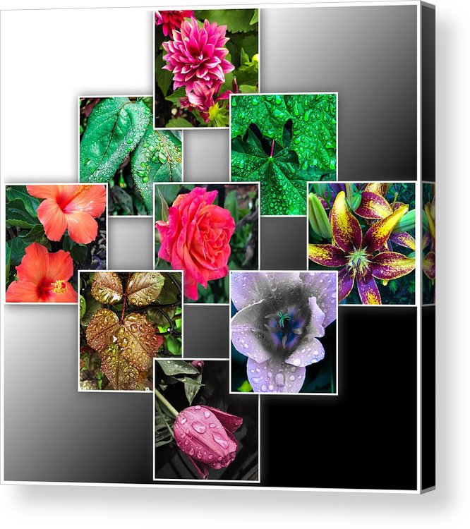 Roses Acrylic Print featuring the photograph Collage Of Spring Flowers by Cate Franklyn