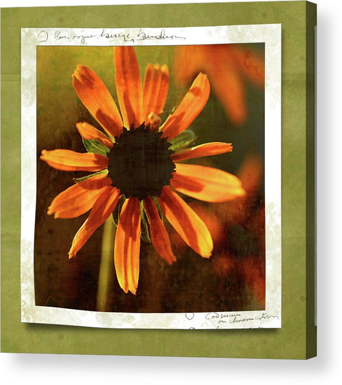 Echinacea Acrylic Print featuring the photograph Face The Day by Bonnie Bruno