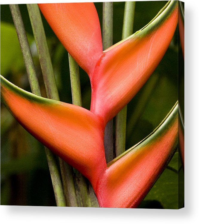 Natural Acrylic Print featuring the photograph Form Color Texture Pattern Plants 3 by Charlie Osborn