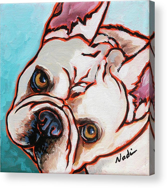 French Bulldog Acrylic Print featuring the painting French Bulldog by Nadi Spencer