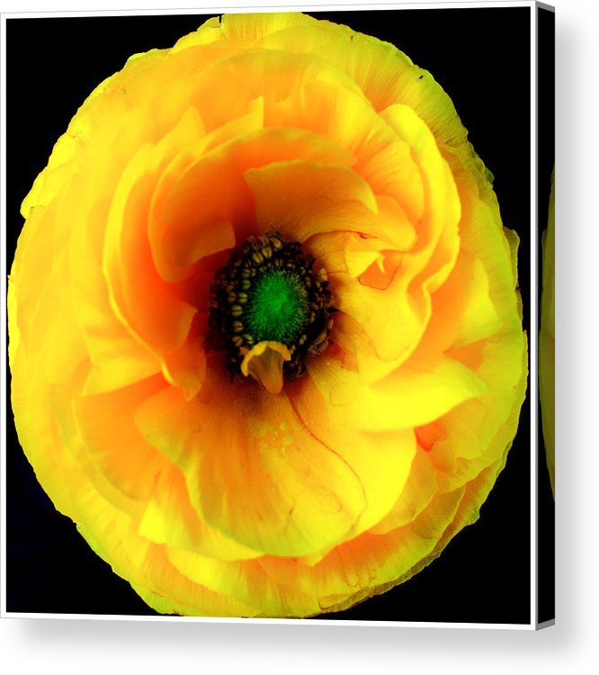 Glow Acrylic Print featuring the photograph Glow by William Atkins