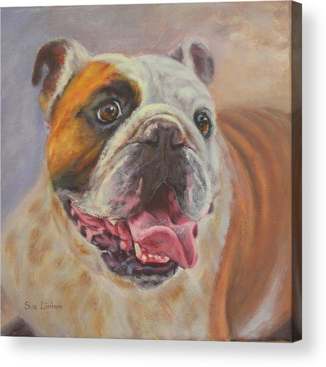 English Bulldog Portrait Acrylic Print featuring the painting Griff by Sue Linton