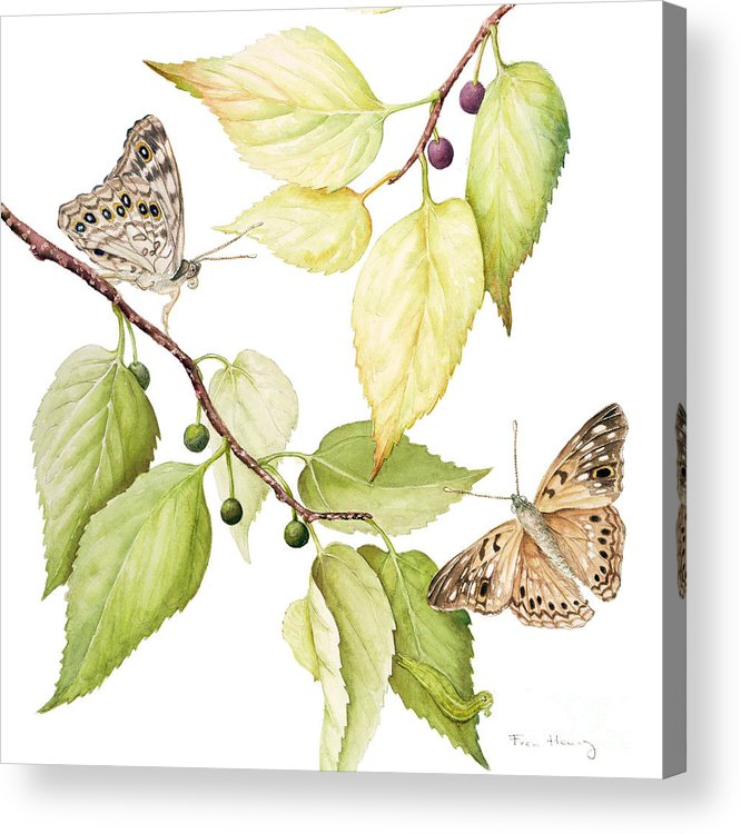Butterfly Acrylic Print featuring the painting Hackberry Emperor Butterfly by Fran Henig