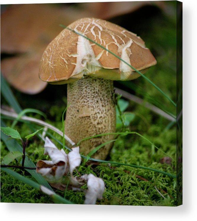 Fungus Acrylic Print featuring the photograph Little Shroom by Teresa Mucha