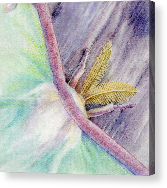 Luna Moth Acrylic Print featuring the painting Luna Moth by Mindy Lighthipe