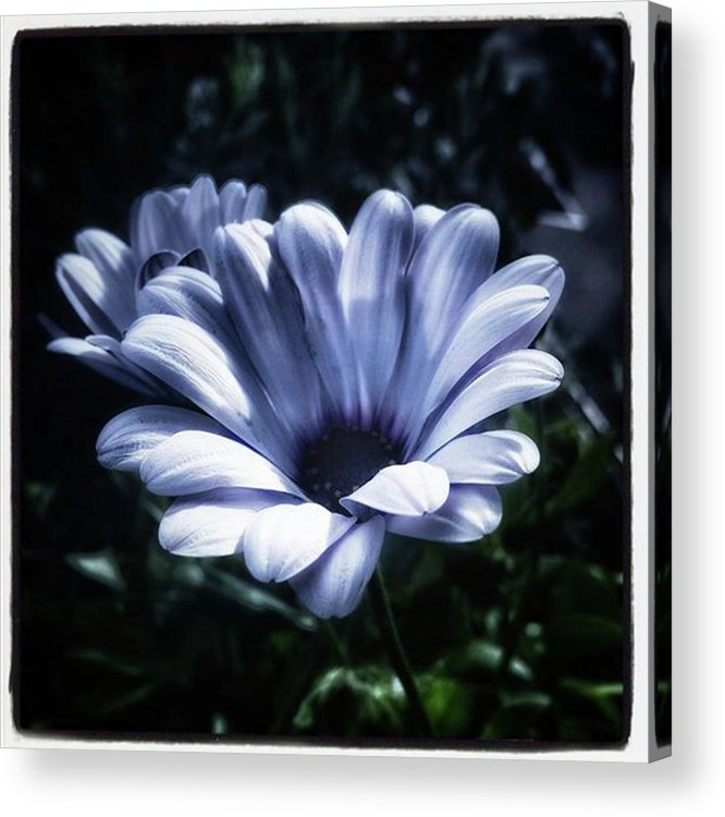 Flower Acrylic Print featuring the photograph Moonlit Petals. From The Beautiful by Mr Photojimsf