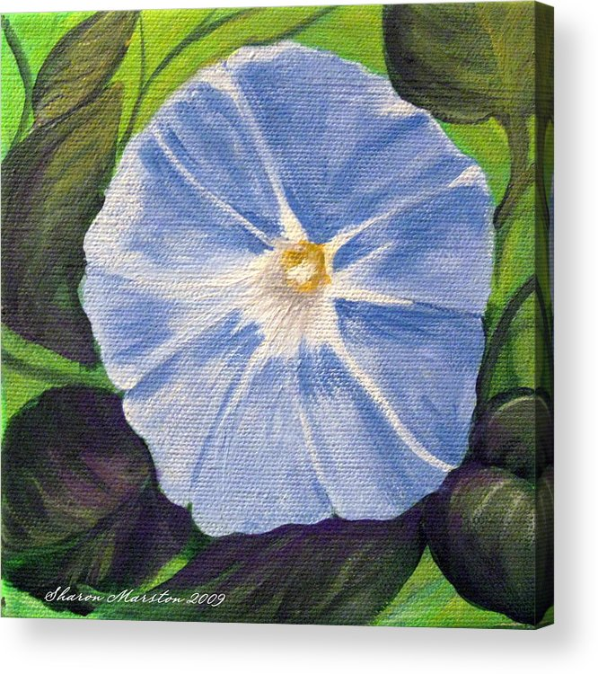Morning Glory Acrylic Print featuring the painting Morning Glory by Sharon Marcella Marston