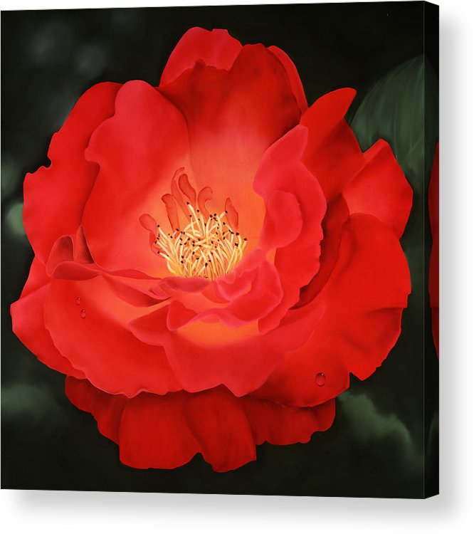 Flower Acrylic Print featuring the painting Red Rose by Ora Sorensen