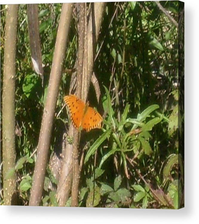 Butterfly Acrylic Print featuring the photograph Resting by Carla Fionnagain