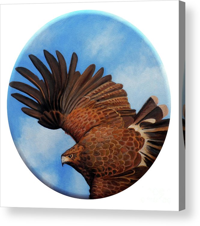 Hawk Acrylic Print featuring the painting Riding The Wind by Brian Commerford