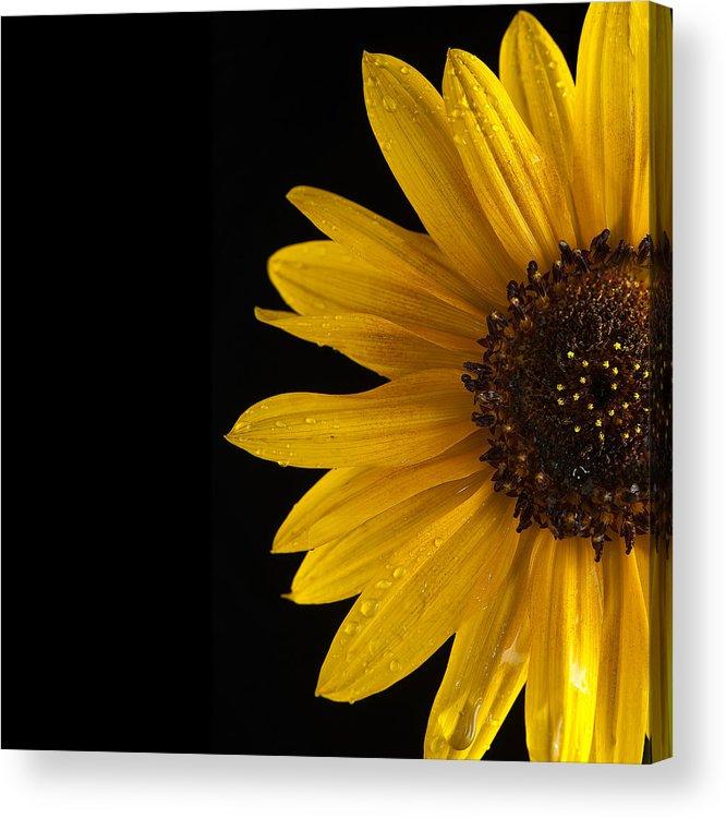 Sunflower Acrylic Print featuring the photograph Sunflower Number 3 by Steve Gadomski