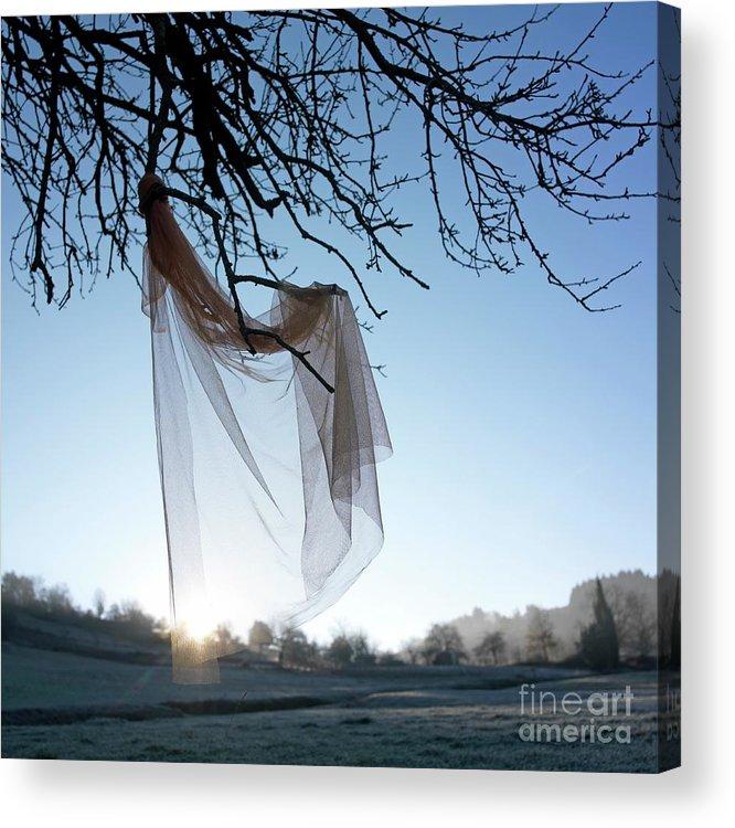 Bare Tree Acrylic Print featuring the photograph Transparent Fabric by Bernard Jaubert