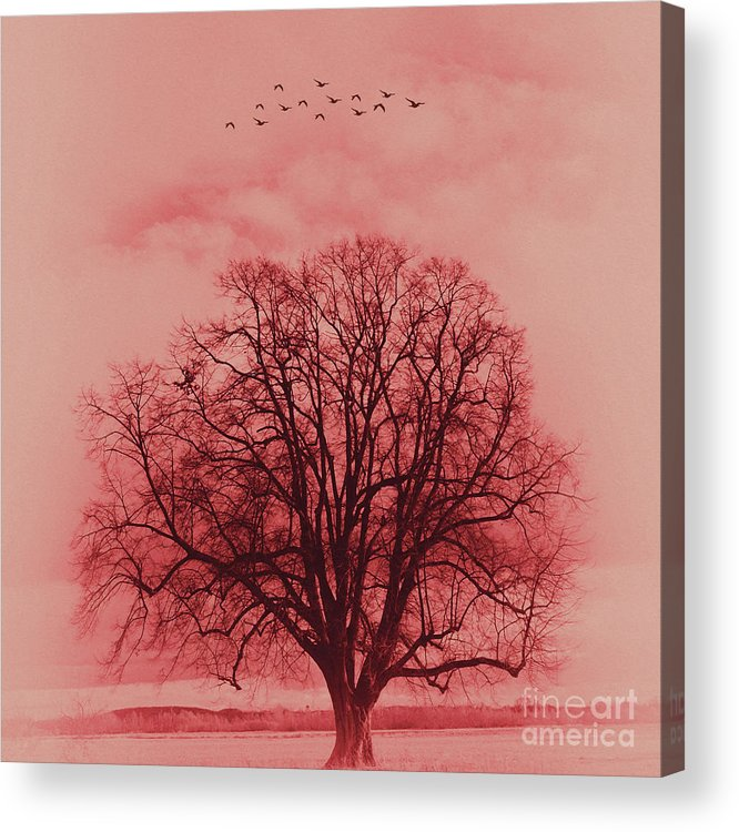 Painting Acrylic Print featuring the painting Tree Art 01 by Gull G