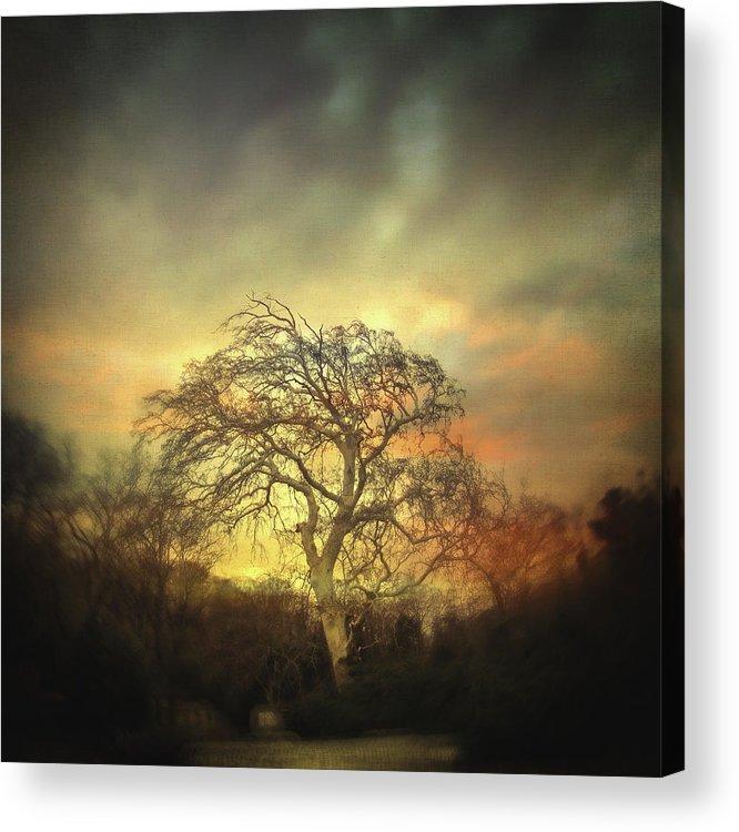 Tree Acrylic Print featuring the photograph Un Dernier Crepuscule by Zapista Zapista