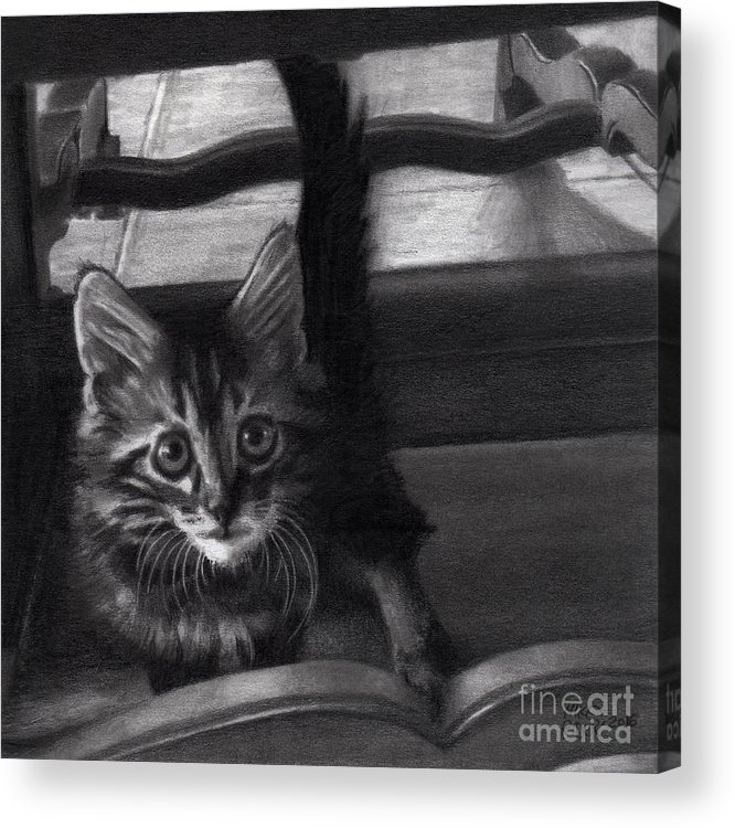 Kitten Acrylic Print featuring the drawing Under The Table by Mike Rider