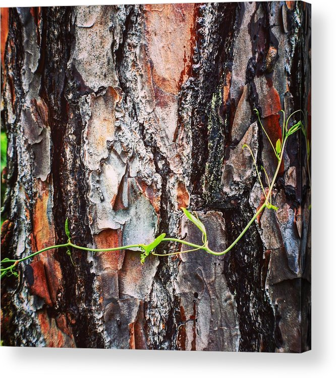 Wrap Acrylic Print featuring the photograph Wrap Myself Around You by Ishtar Stillmank