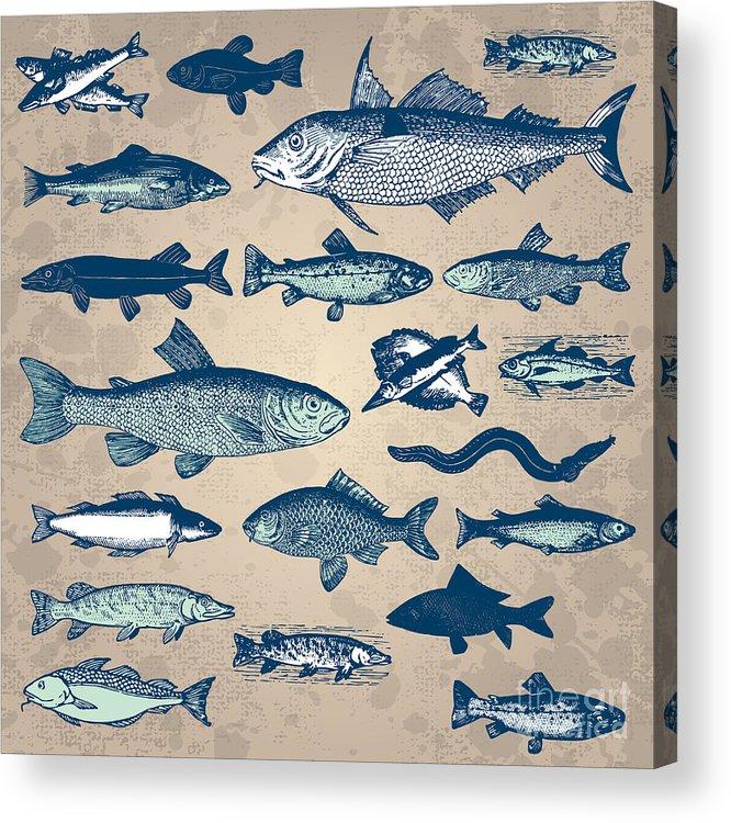 Fauna Acrylic Print featuring the digital art Vintage Fish Drawings Set, Vector by Mila Petkova