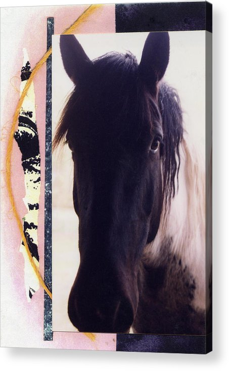 Horse Acrylic Print featuring the photograph Oreo by Mary Ann Leitch