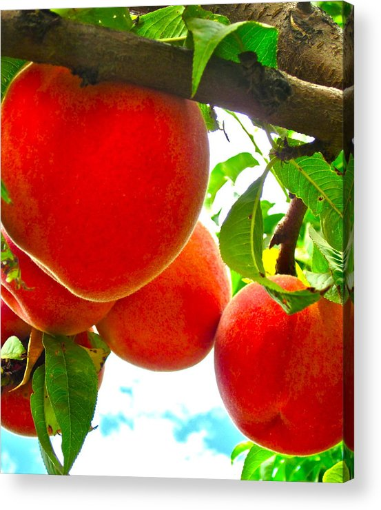 Photograph Of Peaches Acrylic Print featuring the photograph Ready To Pick by Gwyn Newcombe