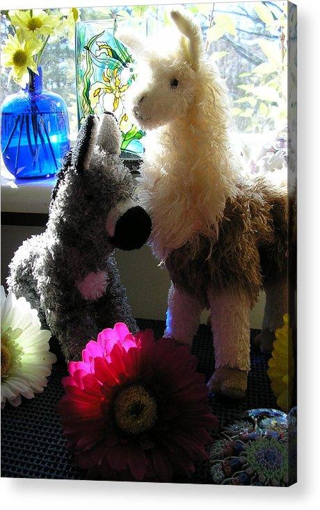 Stuffed Animals Acrylic Print featuring the photograph Donkey Joti And Dali Llama by Christina Gardner